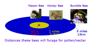 Bee-Distances-to-forage1