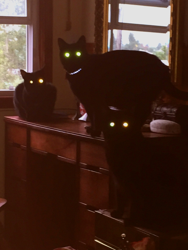 glowy_cats
