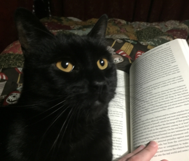 cat_on_book